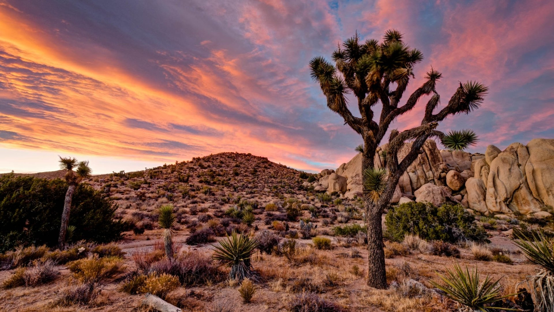 89 Joshua Tree National Park Hd Wallpapers Background Images Wallpaper Abyss Page 3