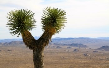 Terra - Joshua Tree National Park Wallpapers and Backgrounds ID : 515719