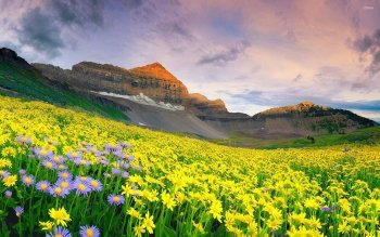 Earth - Flower Wallpapers and Backgrounds ID : 519243