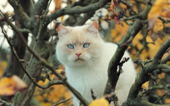 Animal - Cat Wallpapers and Backgrounds ID : 523589