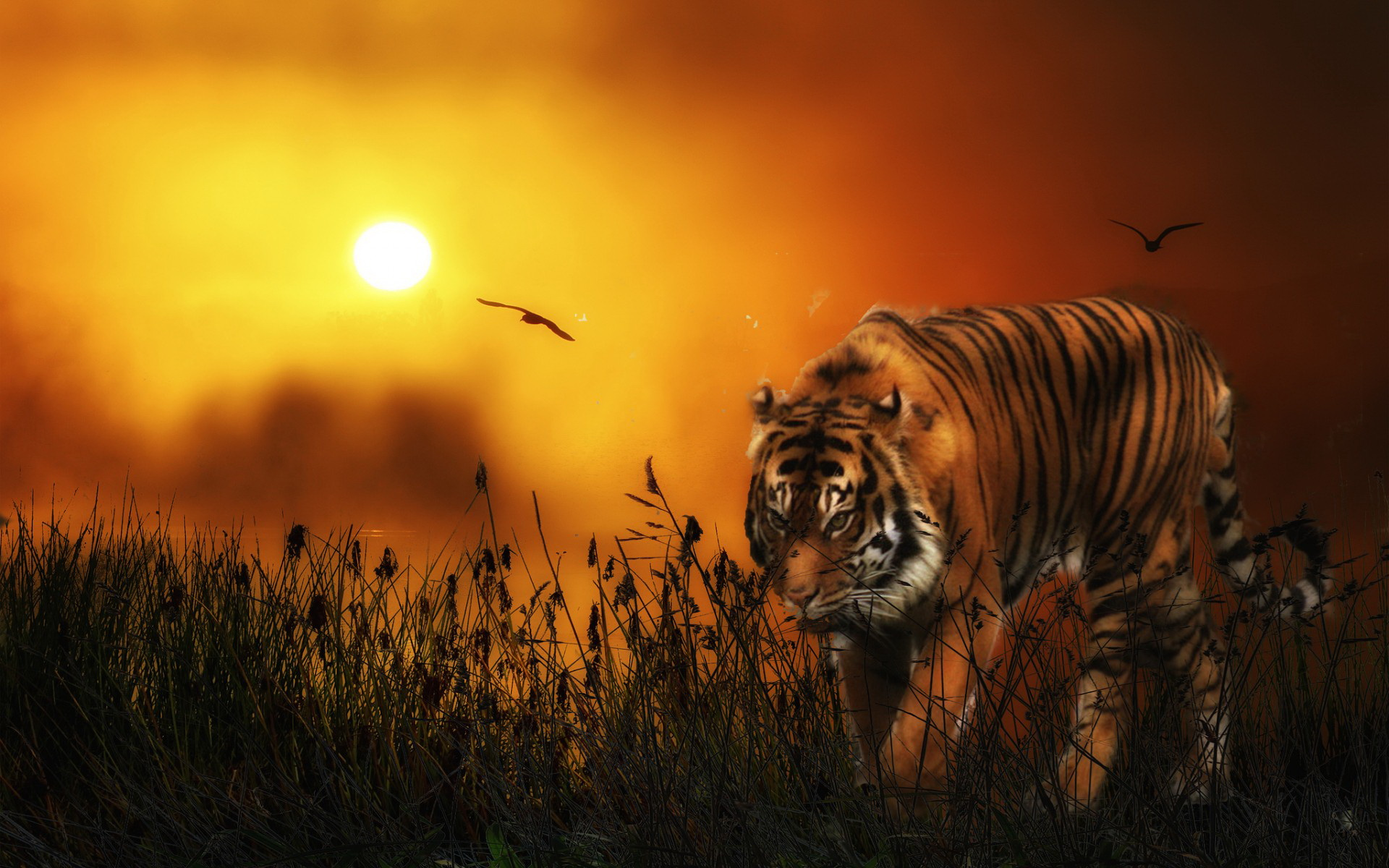 Tiger hd wallpaper background image 1920x1200 id 525097 wallpaper abyss - Tiger hd wallpaper for pc ...