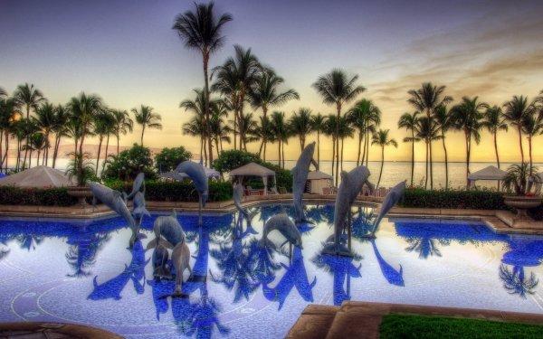 Man Made Resort Tropics Pool Dolphin Palm Tree Sea HD Wallpaper | Background Image