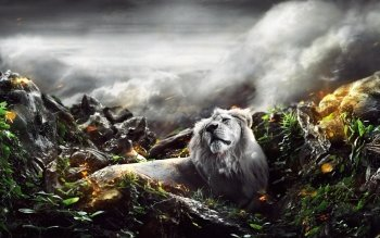 Dierenrijk - Lion Wallpapers and Backgrounds ID : 526209