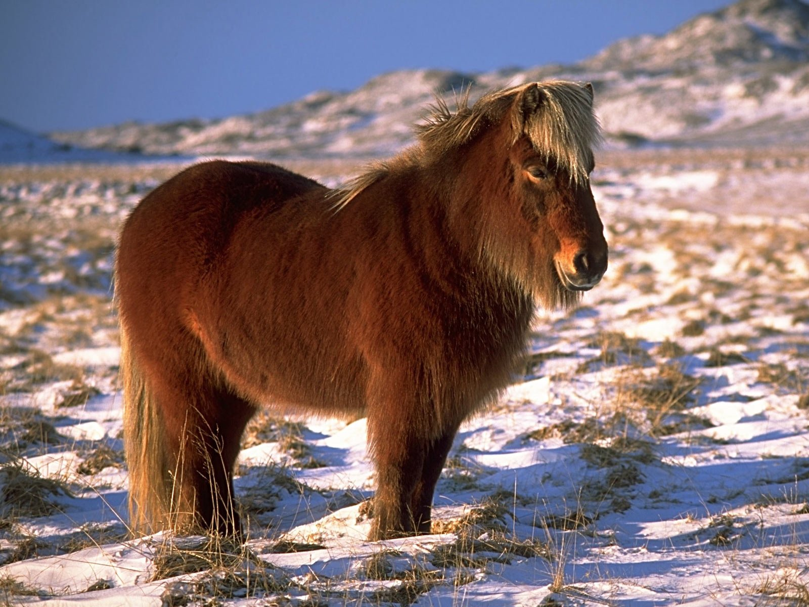 Animal - Horse  Pony Wallpaper