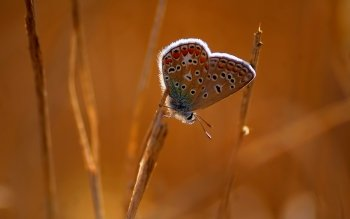 Animal - Butterfly Wallpapers and Backgrounds ID : 529339