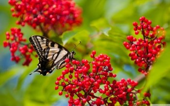 Animal - Butterfly Wallpapers and Backgrounds ID : 530217