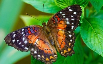 Animal - Butterfly Wallpapers and Backgrounds ID : 531389