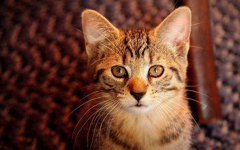 Animal - Cat Wallpapers and Backgrounds ID : 534616