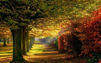 Earth - Autumn Wallpapers and Backgrounds ID : 534628