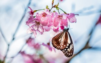Animal - Butterfly Wallpapers and Backgrounds ID : 535346