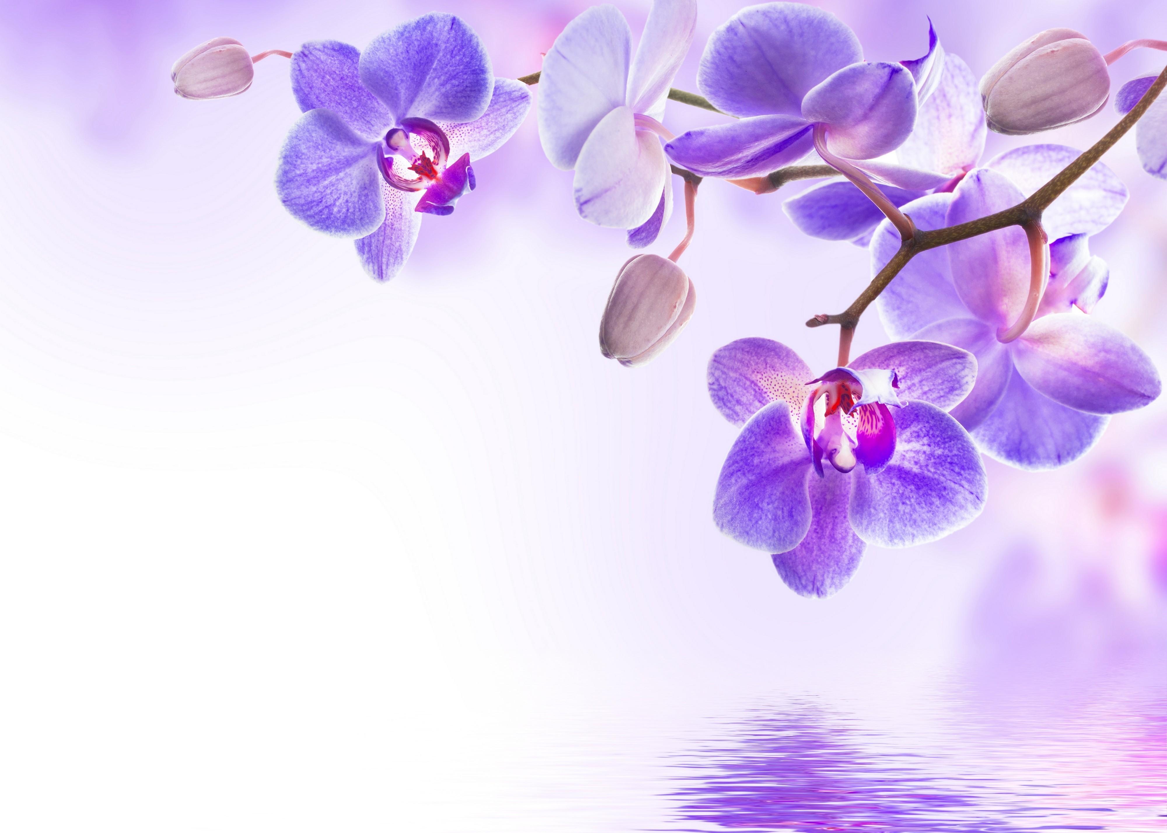 Обои рабочий стол орхидея