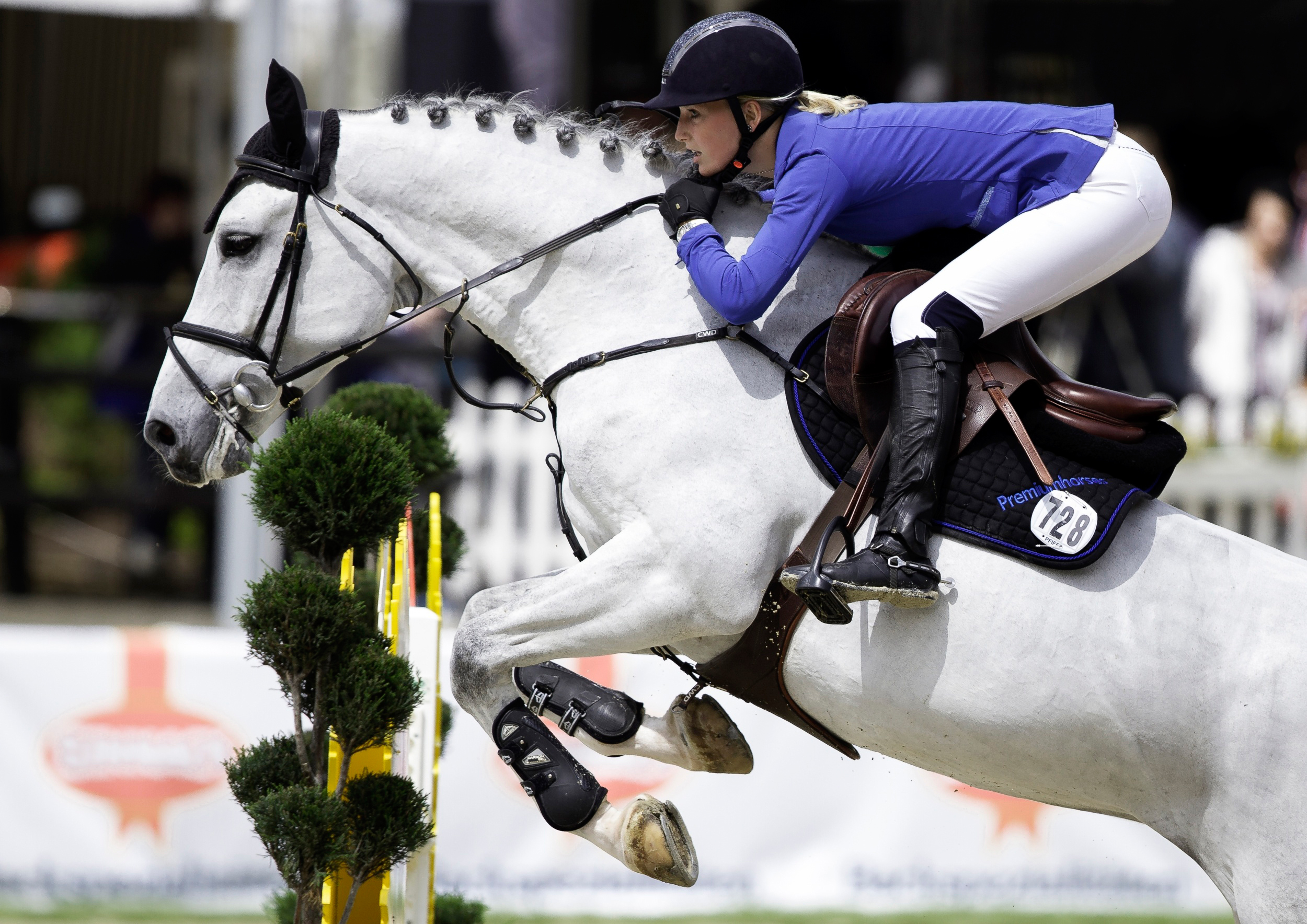 Show Jumping Hd Wallpaper Background Image 2500x1768
