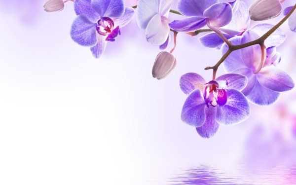 HD Wallpaper | Background Image ID:541028