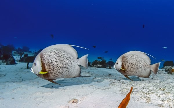 Animal Fish Fishes Sea Bed Underwater HD Wallpaper   Background Image