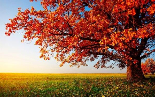 Terre/Nature Arbre Arbres Champ Automne Fond d'écran HD | Arrière-Plan