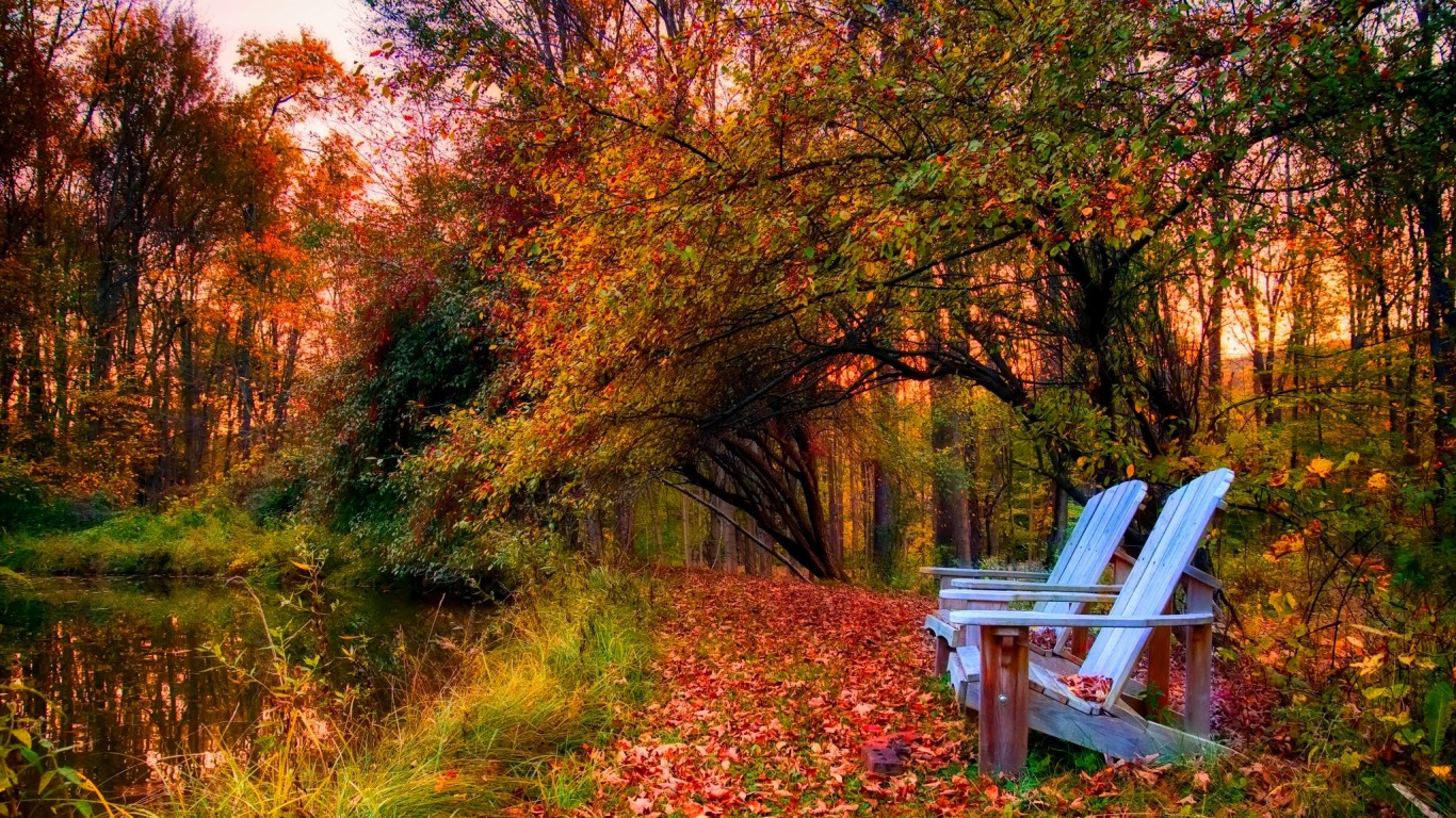 Photography - Autumn  - Forest - Chair Wallpaper