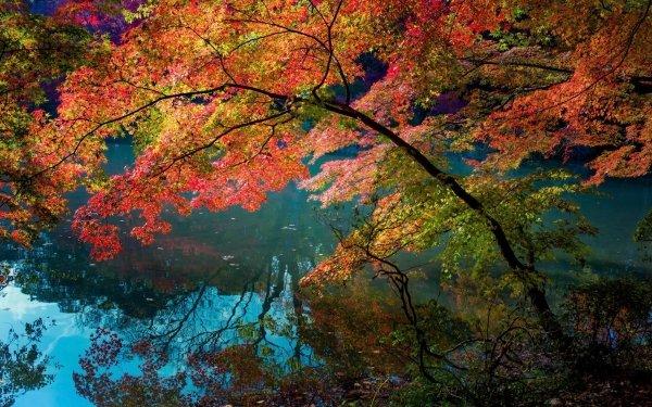 Earth Fall Creek Tree Branch Leaf HD Wallpaper | Background Image
