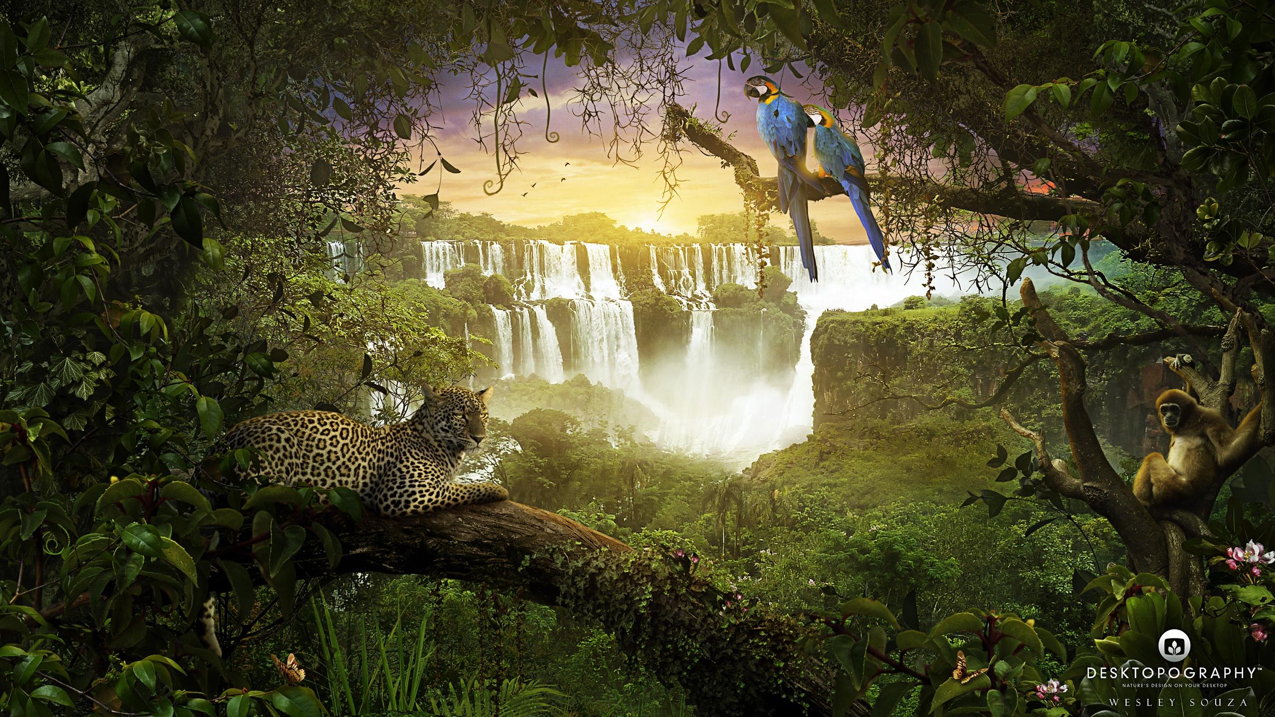Обои на рабочий стол джунгли животные