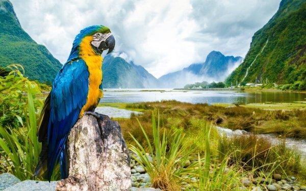 Animales Guacamayo azul y amarillo Aves Loros Guacamayo Loro Rio Montaña Niebla Fondo de pantalla HD | Fondo de Escritorio