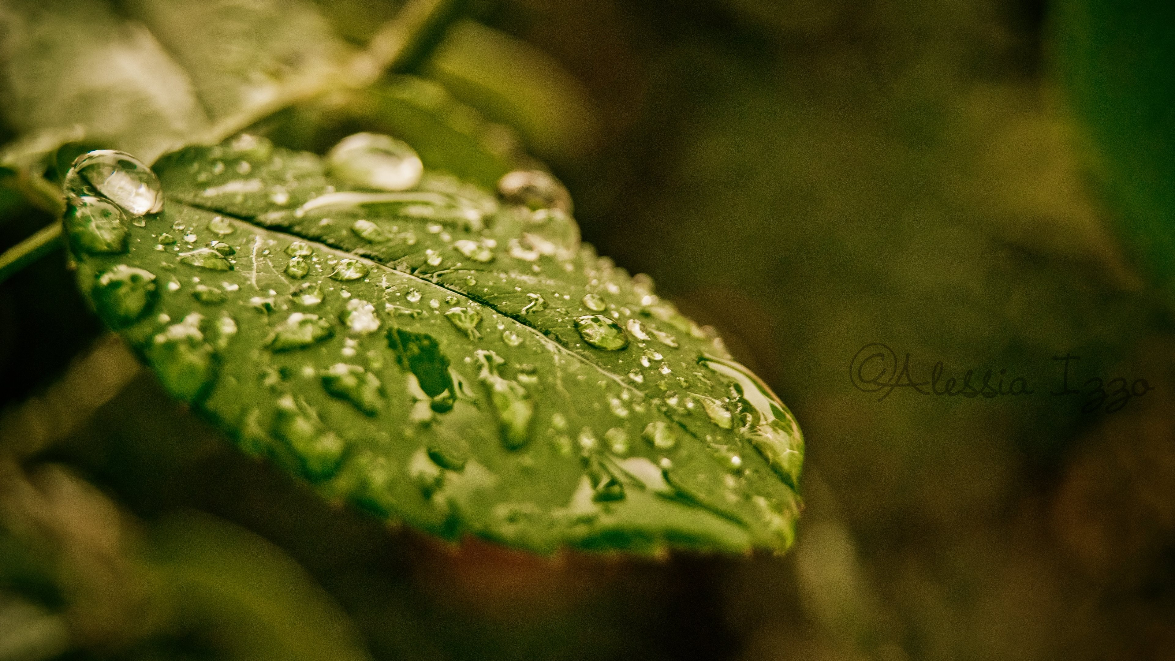 droplets on leaves 4k - photo #35
