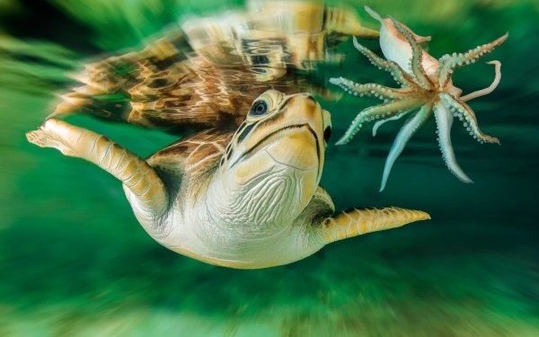 Animales Tortuga Gamba Underwater Fondo de pantalla HD   Fondo de Escritorio