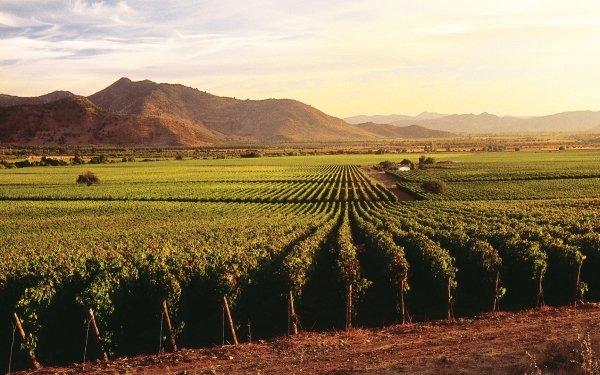Man Made Vineyard Nature Landscape HD Wallpaper   Background Image
