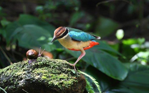 Animal Bird Birds Snail HD Wallpaper   Background Image