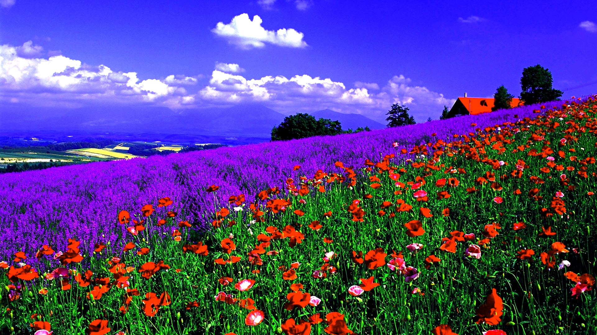 Terra natura paesaggi natura fiori spring sfondo for Sfondi desktop hd paesaggi