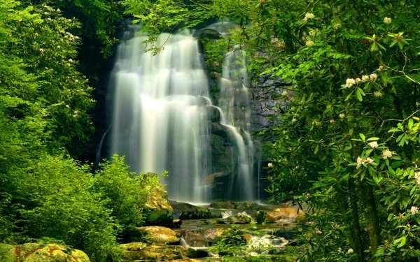 Earth Waterfall Waterfalls Nature Green Forest HD Wallpaper | Background Image