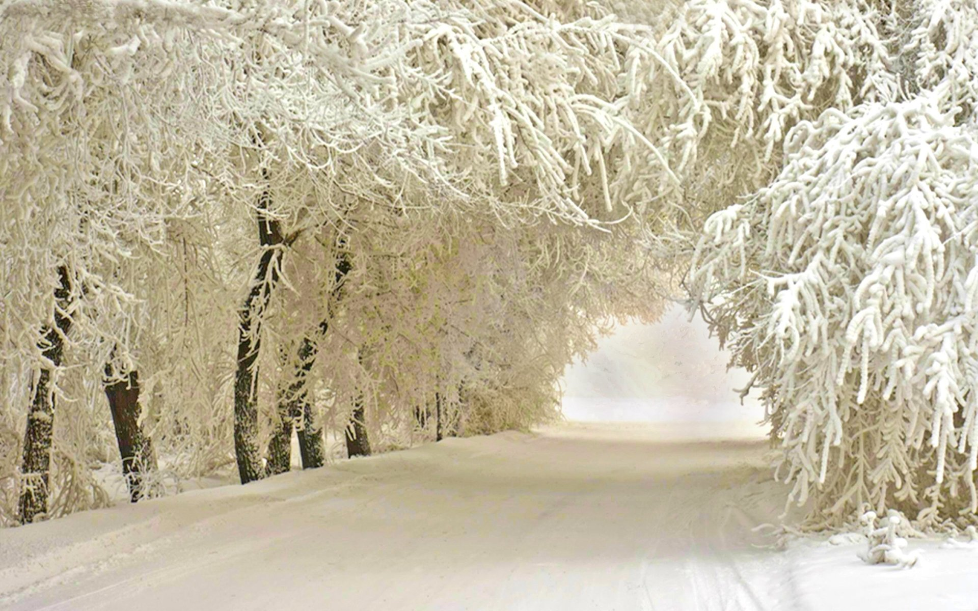 Earth - Winter  Nature Tree Road Snow White Wallpaper