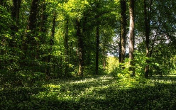 Tierra/Naturaleza Bosque Árbol Verano Naturaleza Paisaje Fondo de pantalla HD | Fondo de Escritorio