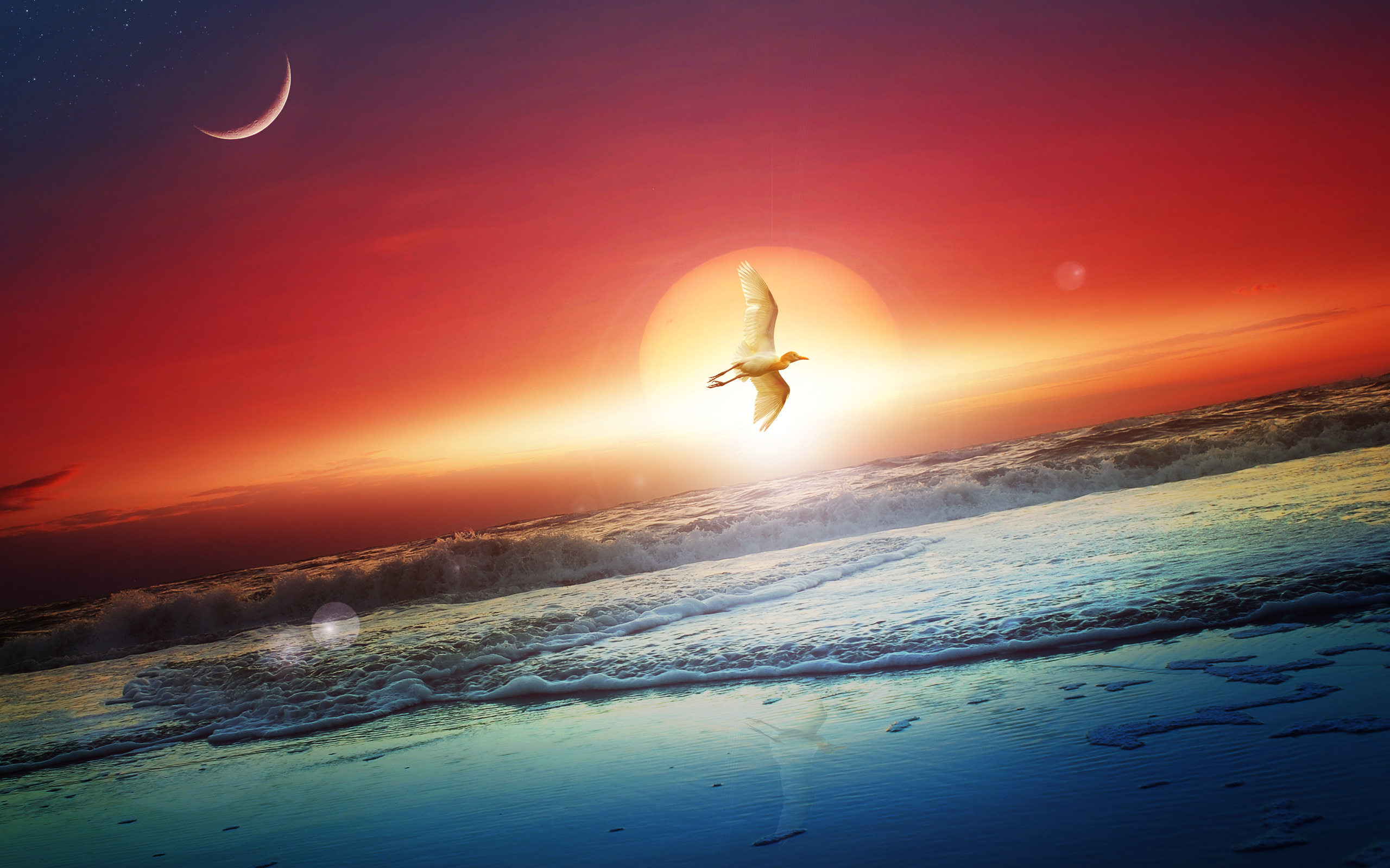 Between Sun And Moon Hd Wallpaper Background Image 2560x1600