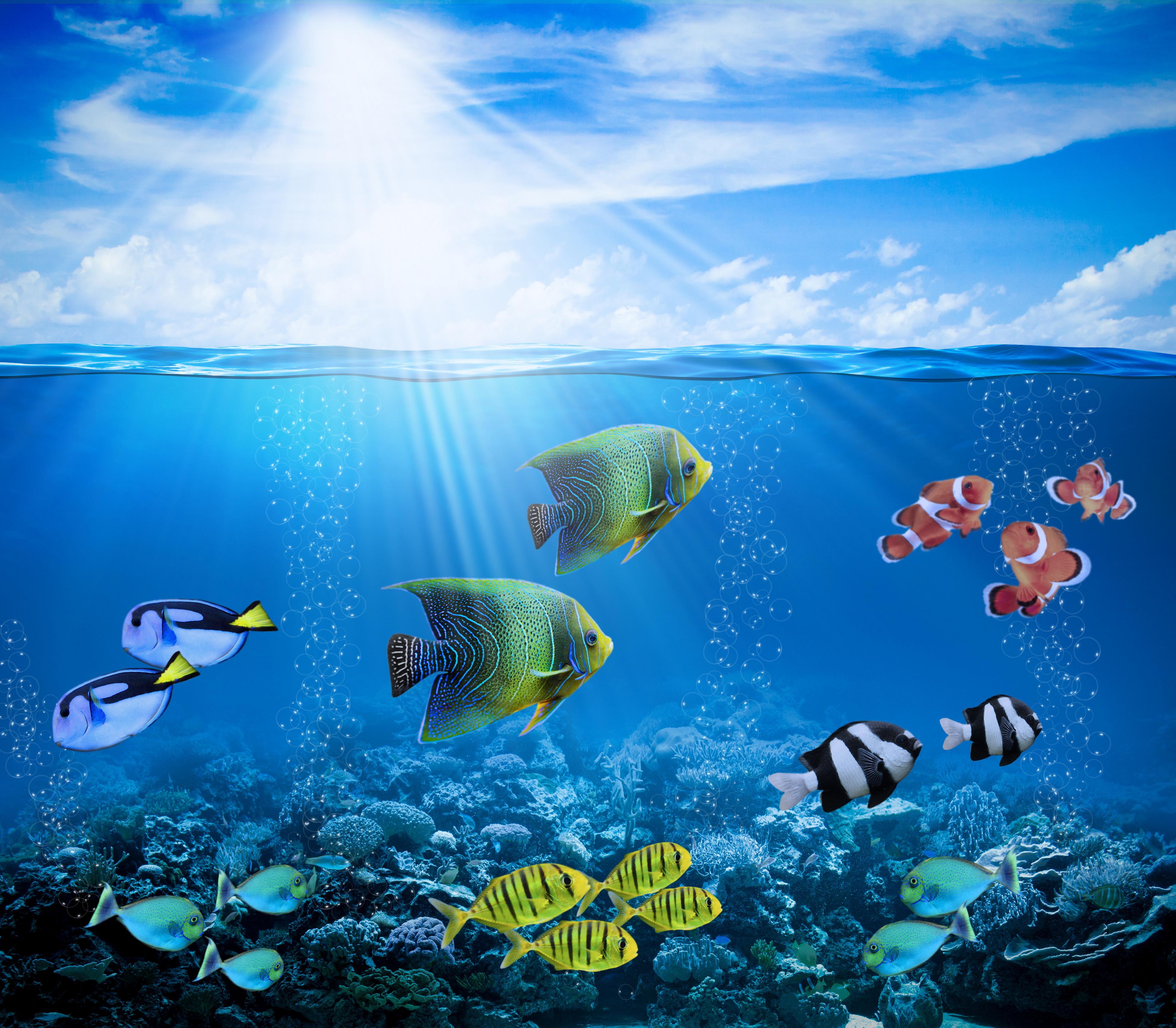 Tropical Fishes Fondos De Pantalla, Fondos De Escritorio