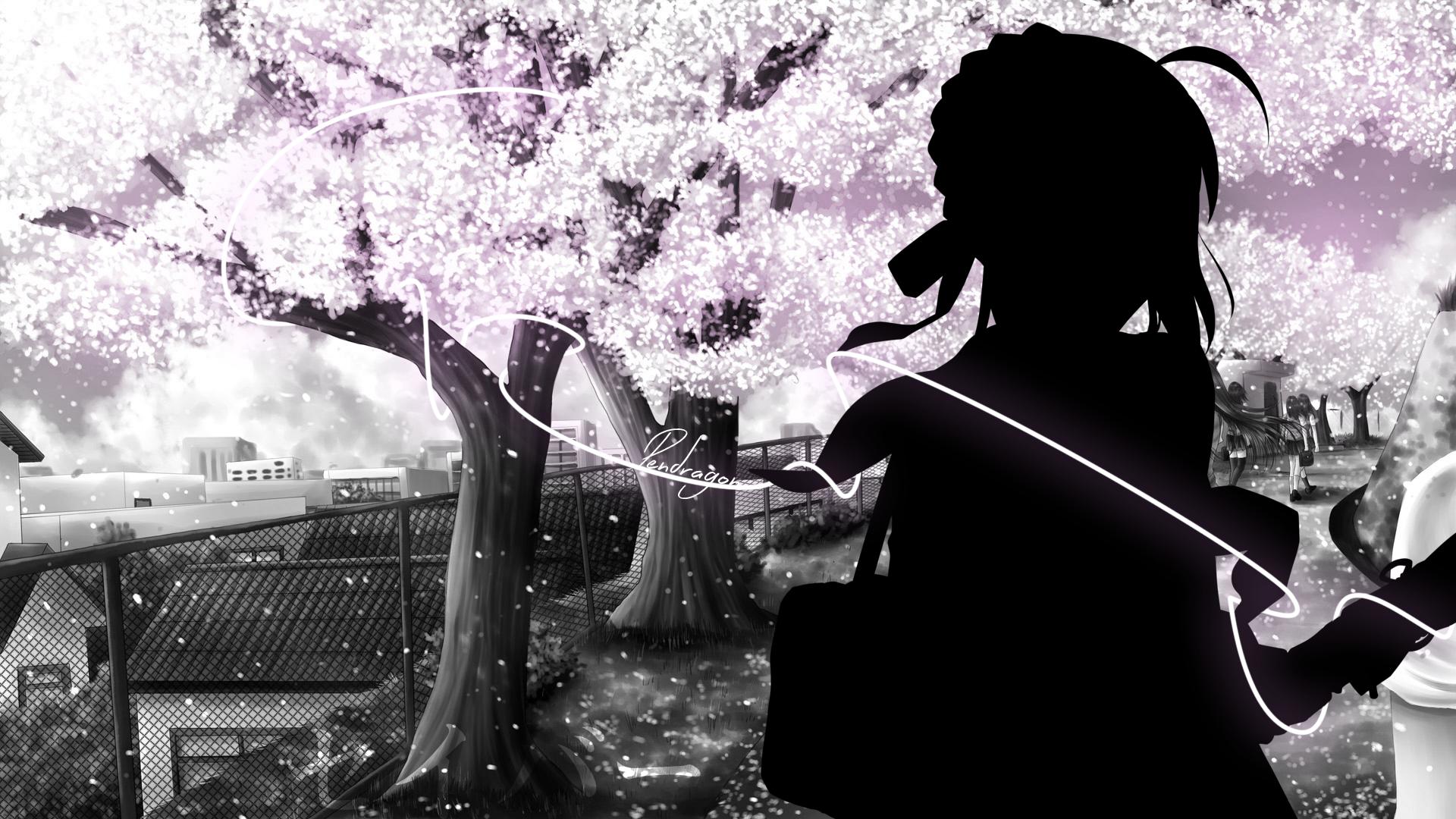 Sakura Tree White Wallpapers ID621496