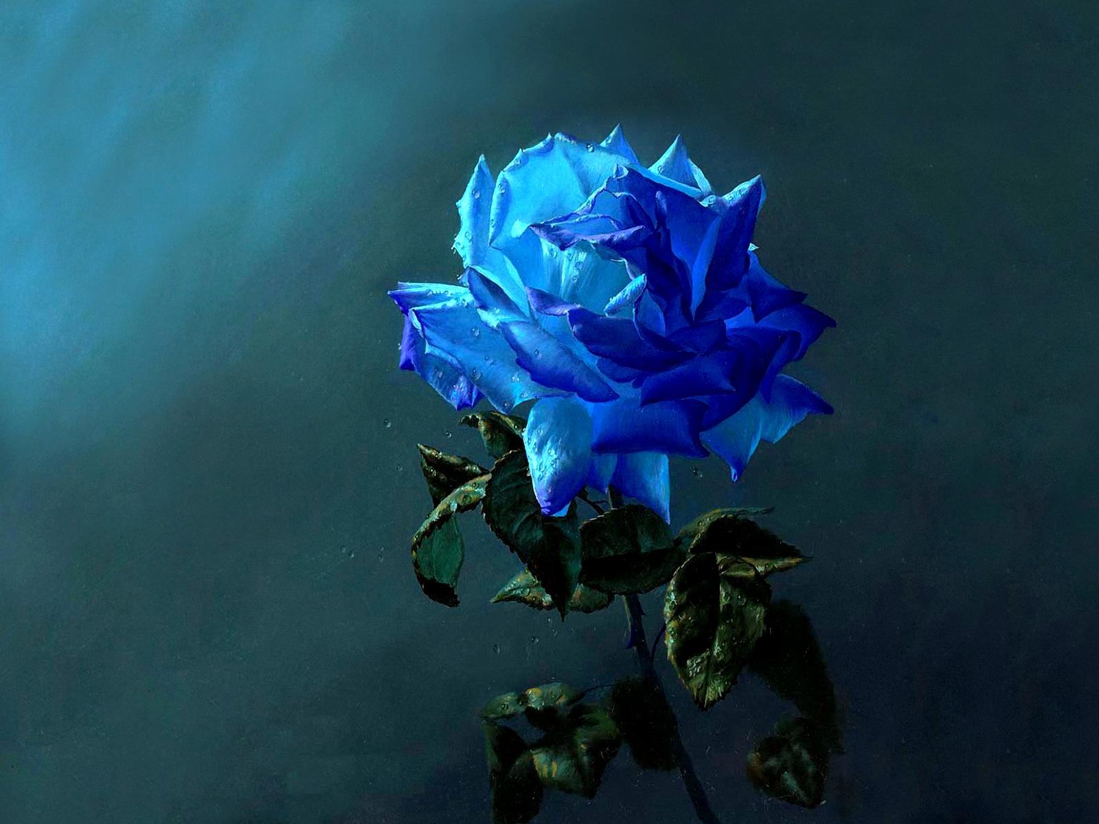 Artistic blue rose wallpaper and background image - Big rose flower wallpaper ...
