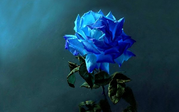 Earth Rose Flowers Flower Close-Up Blue Flower Blue Rose HD Wallpaper | Background Image