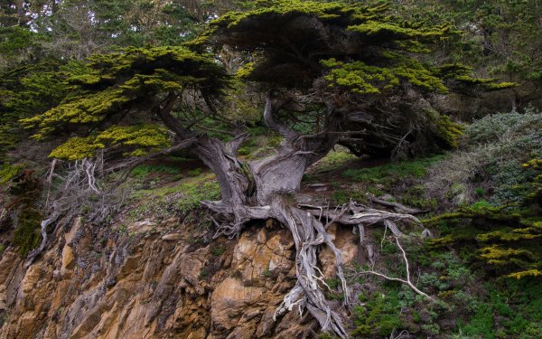 Earth Tree Trees Rock Roots Nature Twisted Tree HD Wallpaper | Background Image