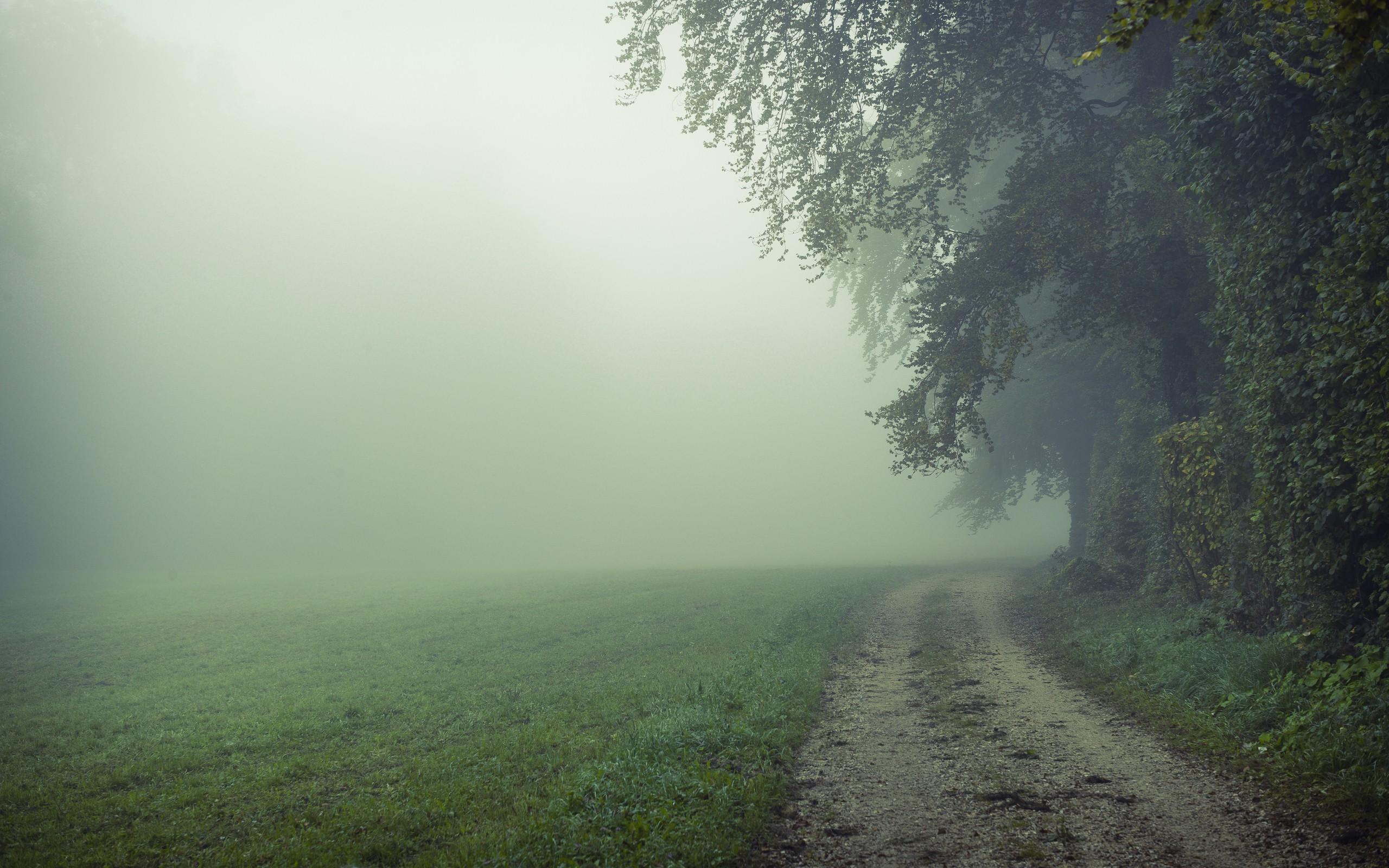 Foggy Field HD Wallpaper