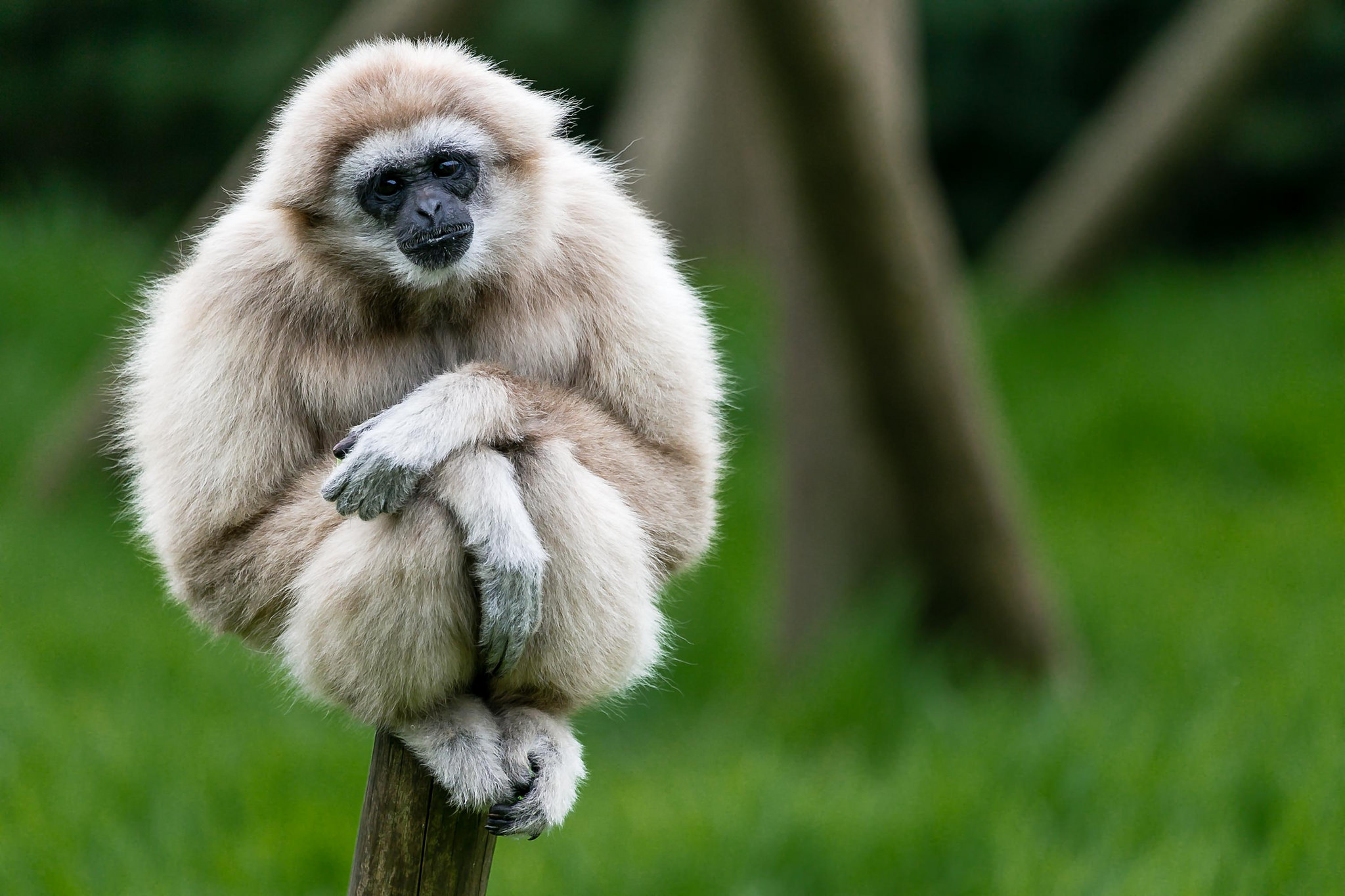 how to build a gibbon wall