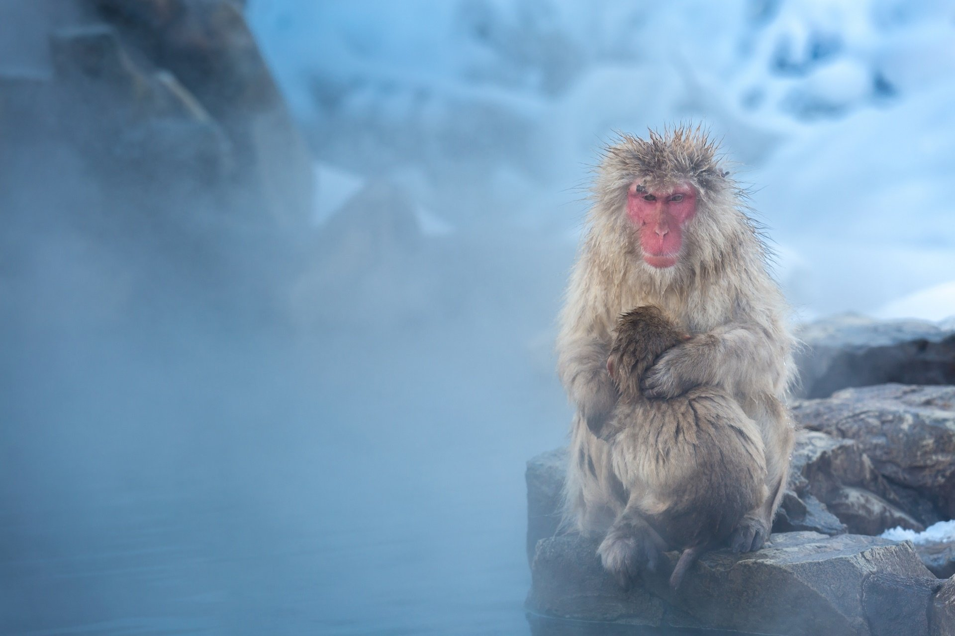 japanese macaque computer wallpapers desktop backgrounds