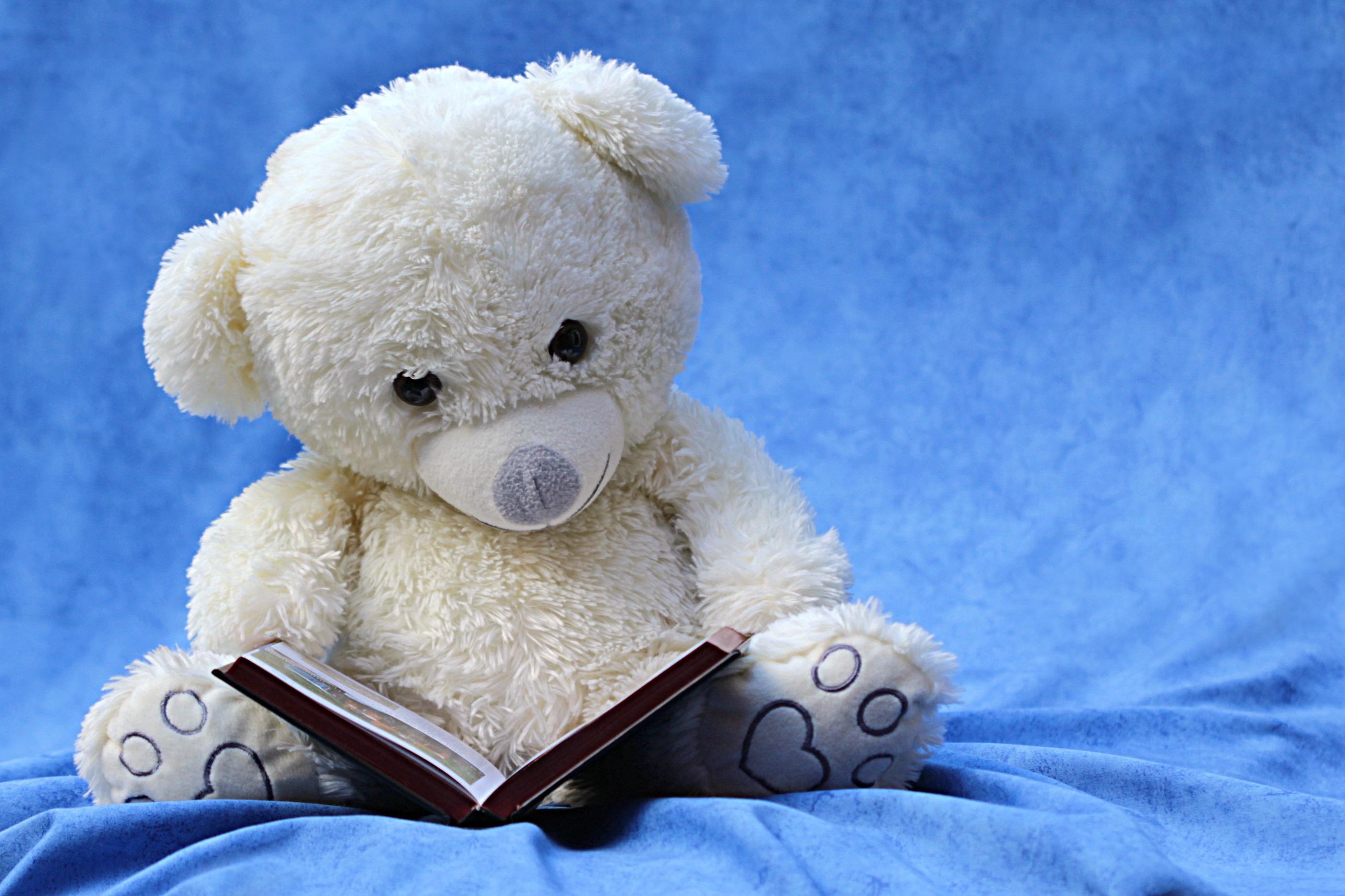 White stuffed teddy bear reading full hd wallpaper and background man made stuffed animal teddy bear toy book still life blue wallpaper altavistaventures Images