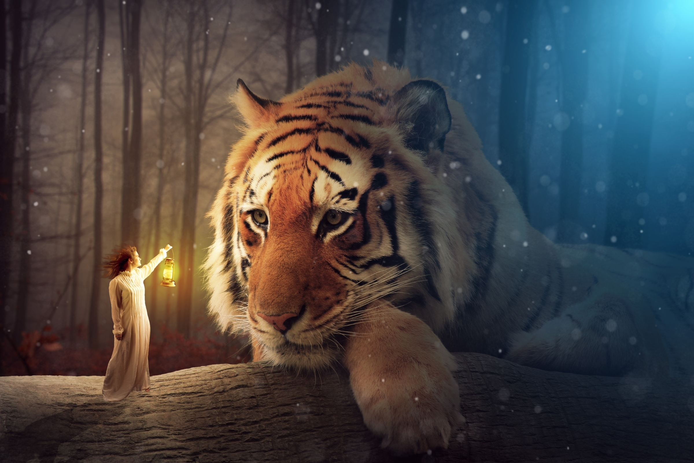 Tiger Full HD Wallpaper and Background | 2400x1600 | ID:676707
