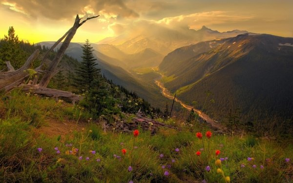 Earth Mount Rainier Mountains HD Wallpaper | Background Image