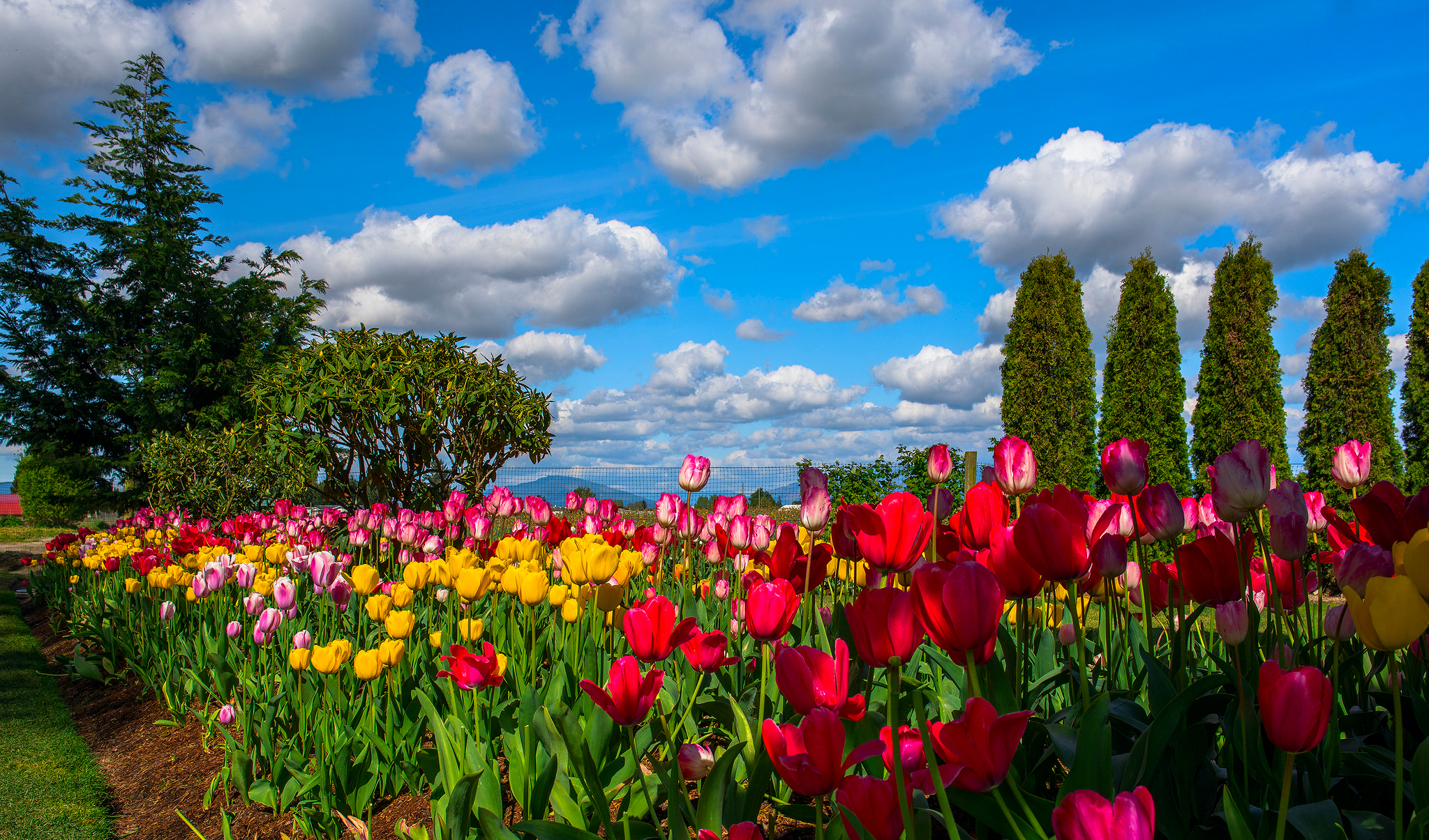 Beautiful Sky over Tulip Garden Full HD Wallpaper and Background ... for Flower Park Background  45jwn