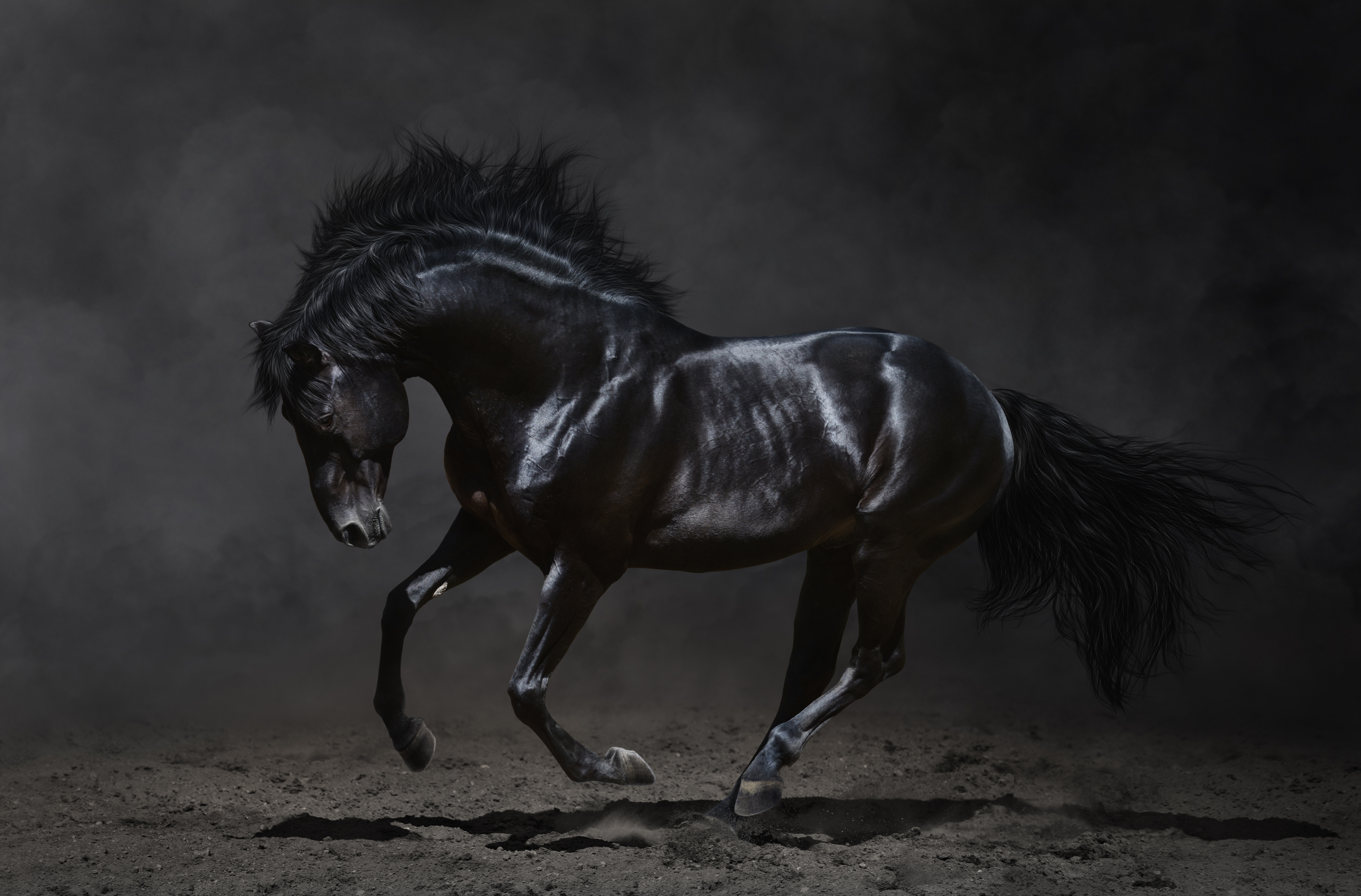 128 4k ultra hd horse wallpapers background images wallpaper abyss hd wallpaper background image id681642 5944x3914 animal horse thecheapjerseys Image collections