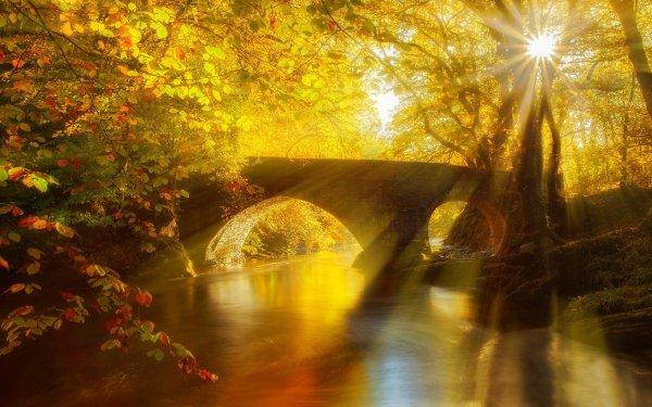 Man Made Bridge Bridges Forest Tree Fall Foliage Leaf Sunshine Sun Golden Nature River Sunbeam HD Wallpaper | Background Image
