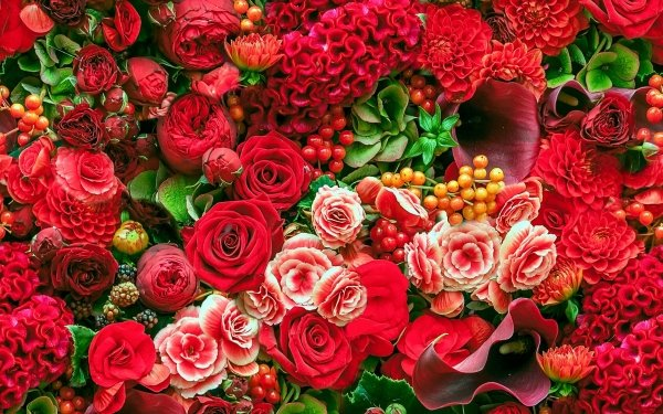 Earth Flower Flowers Rose Dahlia Begonia Calla Leaf Nature Red Flower HD Wallpaper | Background Image