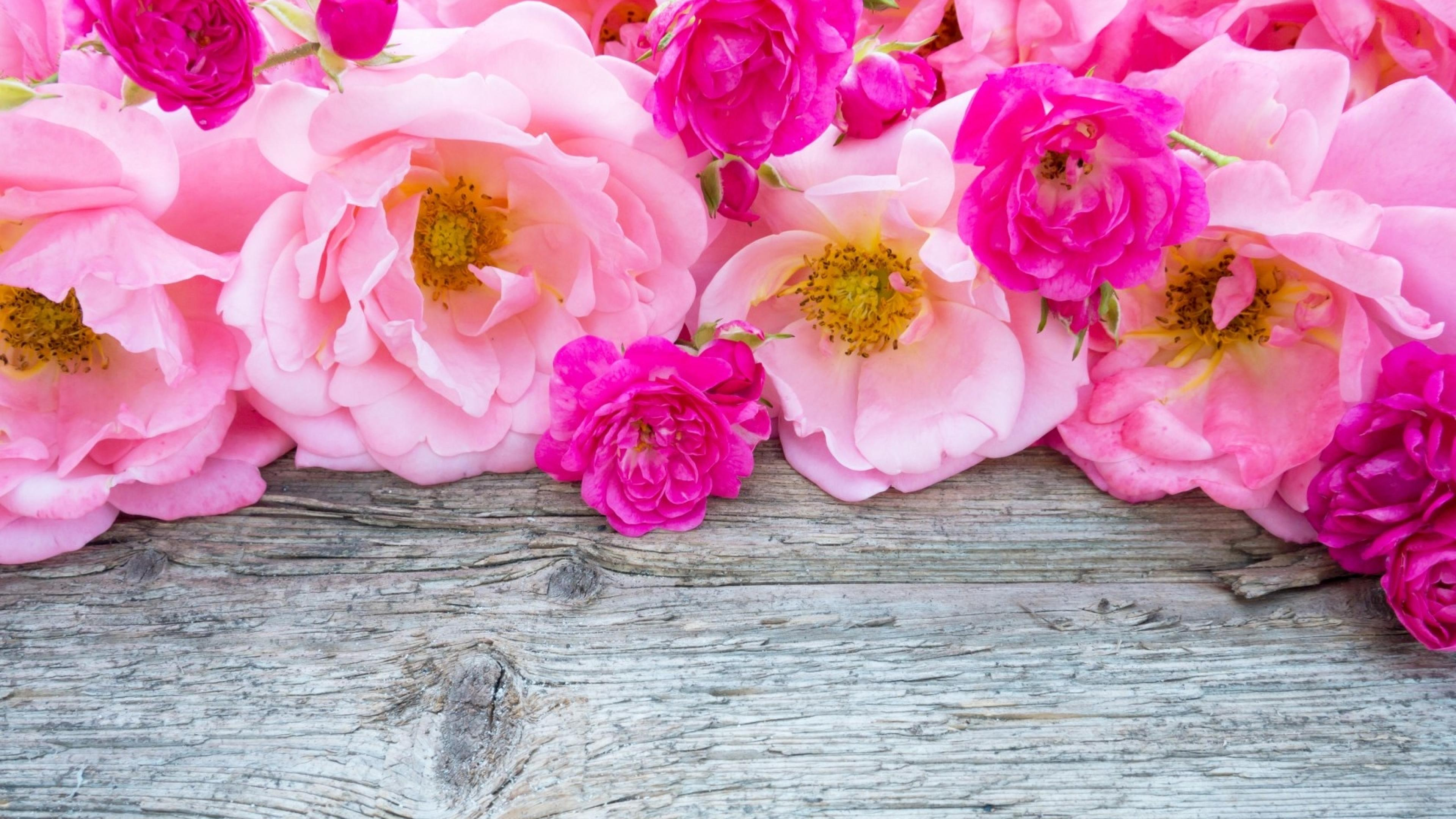 Pink Roses 4k Ultra Hd Wallpaper Background Image 3840x2160