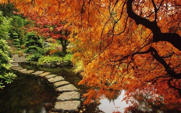 Man Made Japanese Garden Path Garden Tree Fall Stone HD Wallpaper | Background Image
