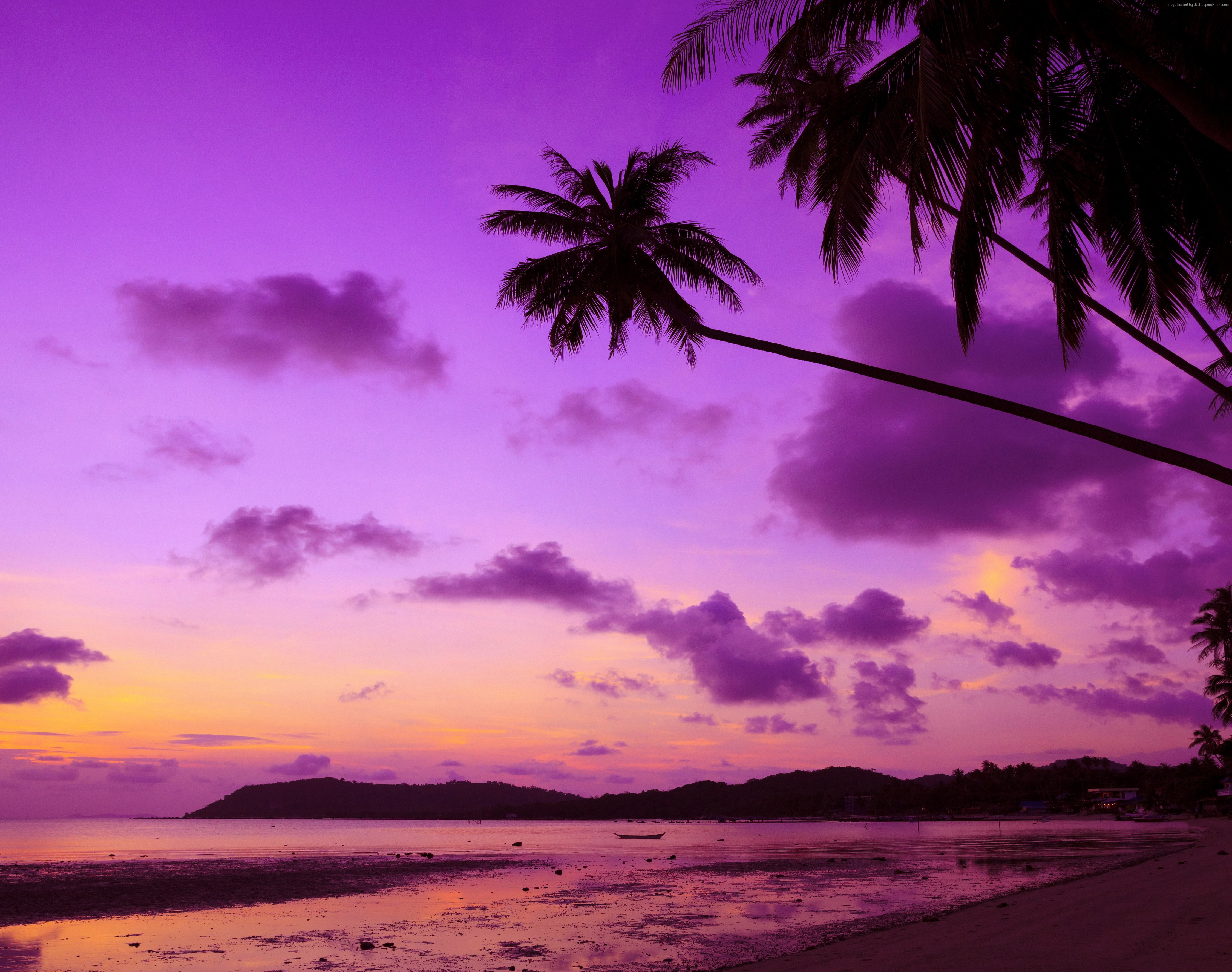 purple palm tree sunset 4k ultra hd wallpaper background